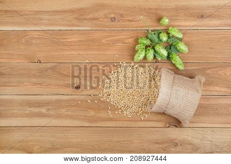 fresh green hops and grains of barley in sack on wooden table with copy space top view. Hop cones for beer. Ingredients for brewing