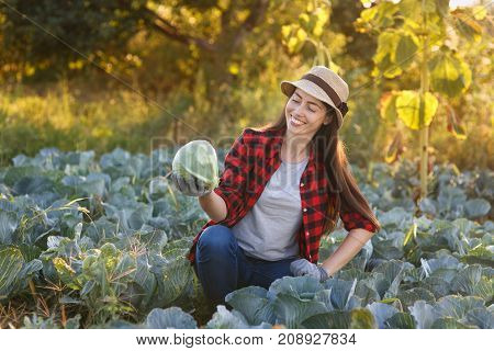 Happy young woman gardener with cabbage in garden. Young farmer harvesting cabbage. Gardening, agriculture, autumn harvest concept