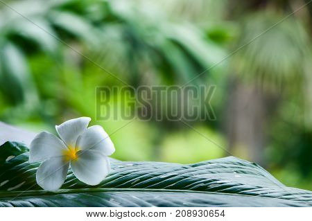 tropical background, vignette of fresh leaves. space for text