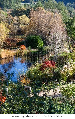 A lushly landscaped garden with a reflection pond in afternoon sunshine in the fall.