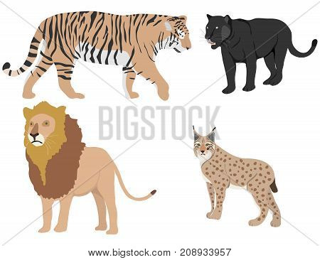 Lion, tiger, panther, lynx. Predators. Flat design, vector illustration, vector.