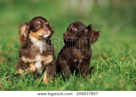 two mixed breed puppies posing together on grass