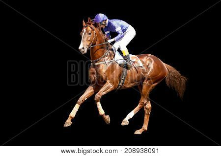 Jokey on a thoroughbred horse in blue closes runs isolated on black background
