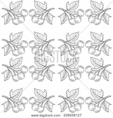 Kukui nut tree Aleurites moluccana . Nuts, plant, berry, fruit natural organic butter ingredient. Hand drawn ink sketch illustration. Treatment, cosmetics, food ingredient. Isolated. Seamless pattern