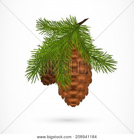 Twig with pine cones. Tree, conifer, decoration. Christmas concept. Can be used for greeting cards, posters, leaflets and brochure