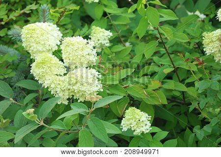 Branch with beautiful flowers in garden