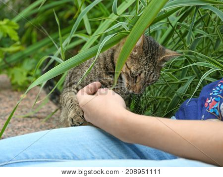 Young woman playing with cute cat outdoors