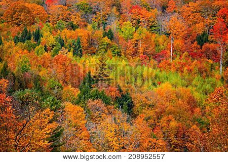 Bright fall foliage in Vermont montains