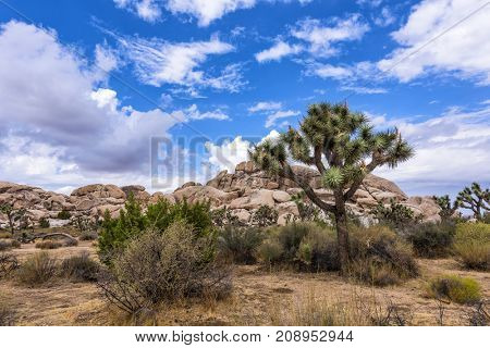 Large Joshua Trees frame the rugged rock formations surrounding the desert landscape.