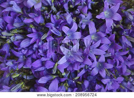 bell field blooms in the garden pattern texture