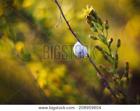 Dry snail on the branch beautiful bokeh