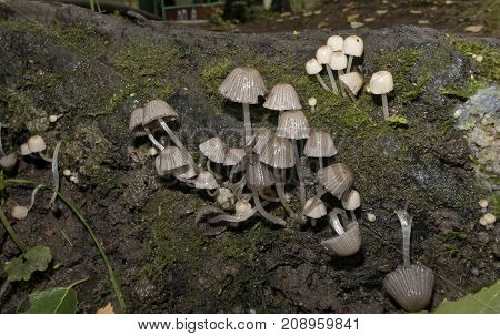 Few Young Mushrooms Grew Among The Moss