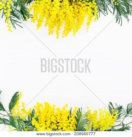 Floral frame with mimosa isolated on white background. Flat lay, top view. Spring time