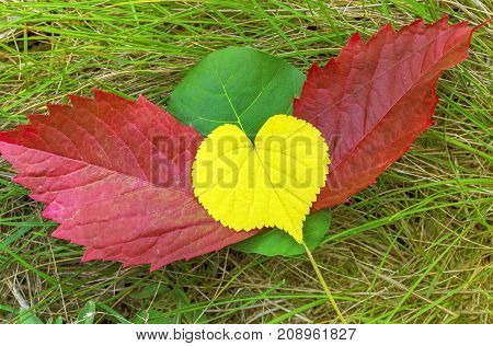 heart with wings, colored autumn а foliage