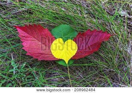 heart with wings of colorful autumn foliage on green grass