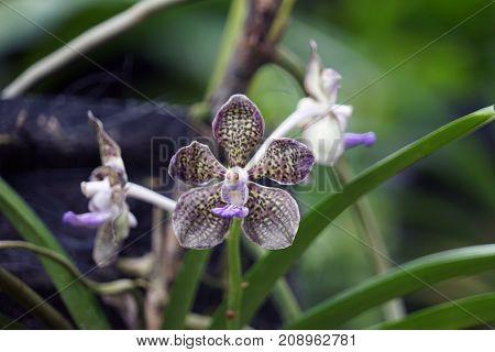 Singapur National Orchid Garden Singapur Orchideen garten .