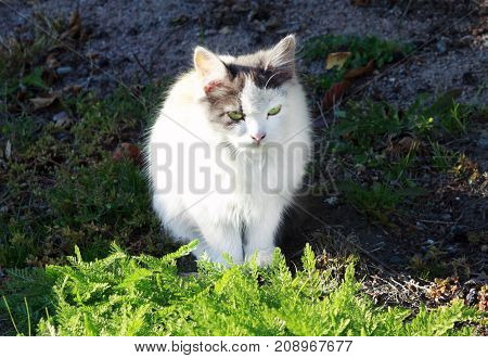 white cat near the green grass in the sun