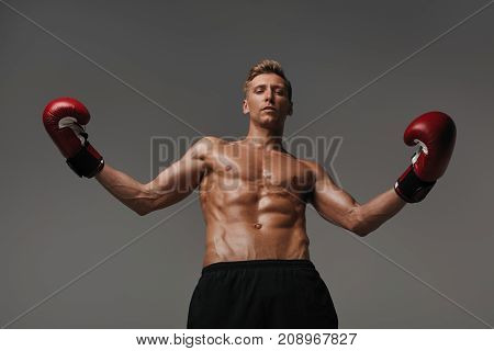From below view of young muscular man in boxing gloves looking confidently at camera on gray.