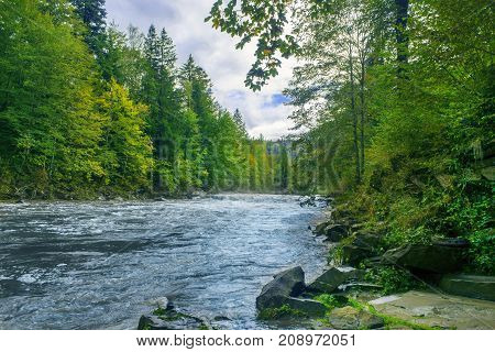 a river in the mountainous region among spruce forests