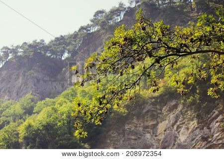 Eagle Rocks, Krasnodar Territory. Absolutely vertical cliffs covered with light limestone and yellow sandstone. On their tops grow pines, oaks, hornbeams.