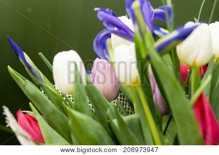 beautiful bouquet flowers on green background tulip