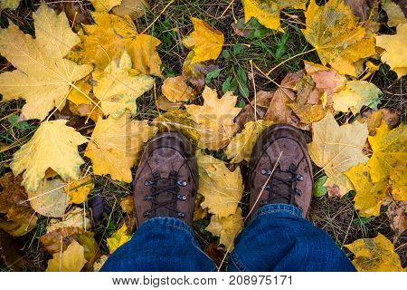 Legs in trekking boots standing on wet yellow autumn leaves on grass, outdoors, above view