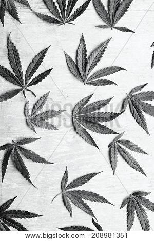 Black And White Horizontal Photos Of Marijuana Leaves On A Deverted Background, High Quality Marijua