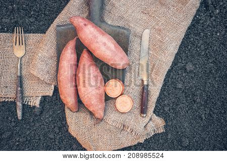 Organic root vegetables sweet potato lying on the spade and coarse cloth served village. Autumn harvest. Copy space. The horizontal frame.
