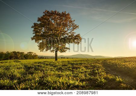 Warm Autumnal scene at hilltop lone tree and lush grass