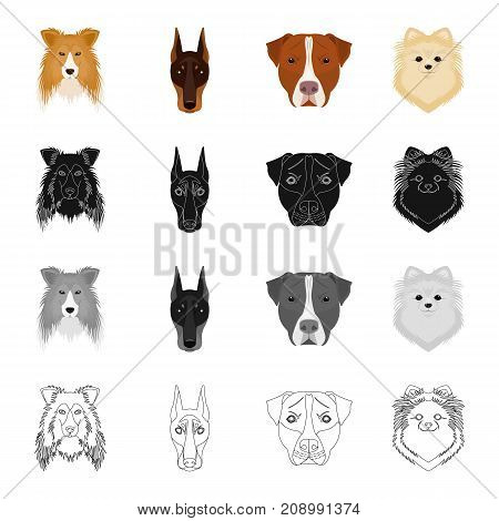 Dog, animal, home and other  icon in cartoon style.Doberman, boxer, pomeranian icons in set collection.