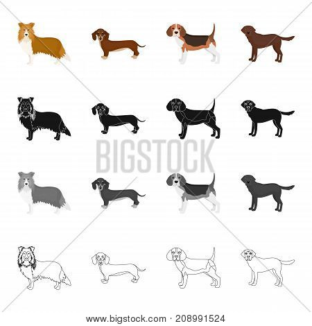 Collie, dachshund, beagle, and other  icon in cartoon style.Dog, animal, domestic icons in set collection