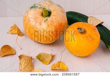 Two Pumpkins, Green Zucchini And Autumn Leaves On The Table