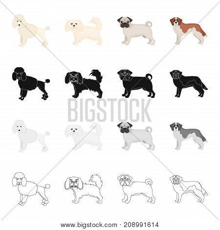 Poodle, lapdog, bulldog, and other  icon in cartoon style.Dog, animal, domestic icons in set collection