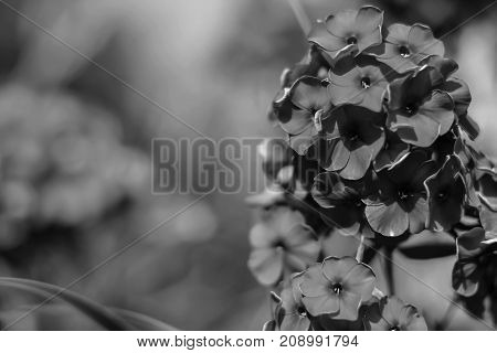 Flowers in the garden by day black and white poster