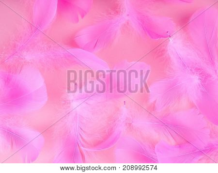 Pink Feathers On A Blue Background, Soft, As Background, Valentine's Day