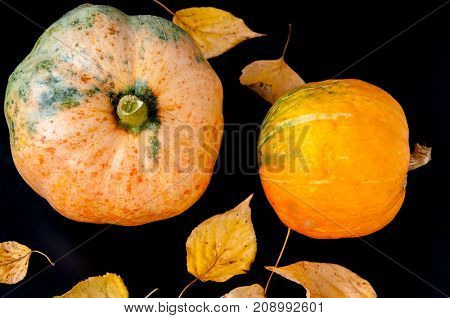 Two Pumpkins And Autumn Leaves On A Black Background