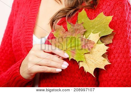 Female autumnal model. Closeup girl in red sweater holding dry maple leaves in hand
