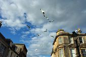Flight of seagulls over the city named Fort Williams in Scotland. poster