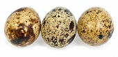 Quail eggs isolated on white the background poster