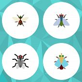 Flat Icon Buzz Set Of Gnat, Fly, Bluebottle And Other Vector Objects poster