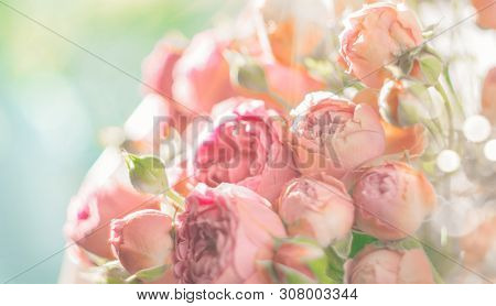 Pink Roses bouquet, blooming roses. Rose flowers bunch in sun light, nature. Holiday gift, Bunch of roses flower. Pastel colours. Holiday backdrop, birthday, wedding bouquet