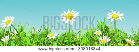 Panoramic Background Of Cartoonish Green Glade With Daisy Flowers