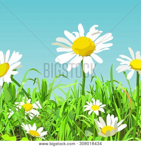 Summer Background Of Cartoonish Green Glade With Daisy Flowers