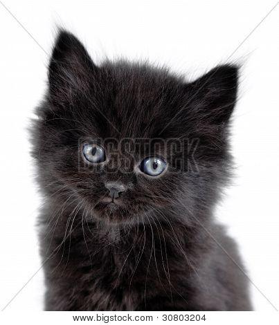 Black little kitten sitting down