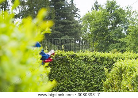 Cutting Hedge With Powertools. A Close Up