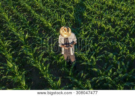 Corn Farmer With Drone Remote Controller In Field. Using Modern Innovative Technology In Agriculture