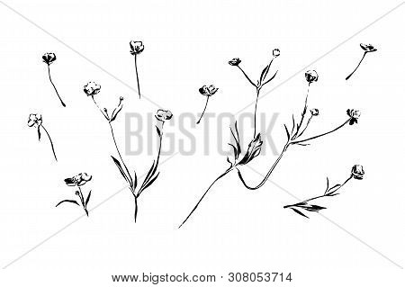 Set Of Hand Drawn Outline Blossom Weed Flowers With Leaves. Sketch Or Doodle Style Vector Image On W