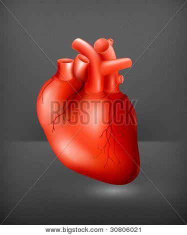 Human heart, eps10 poster