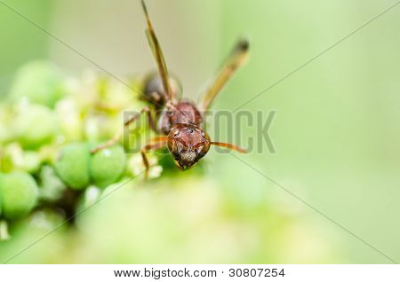Wasp In Green Nature Or In Garden