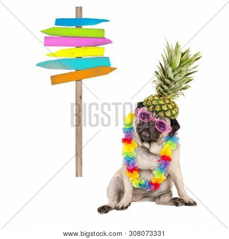 Summer Pug Dog Sitting Down With Colorful Hawaiian Flower Garland, Pink Sunglasses And Pineapple Hat